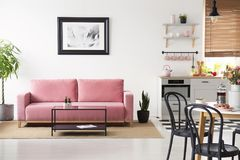 Poster above pink couch in white apartment interior with black c. Hairs at table and kitchenette. Real photo stock image