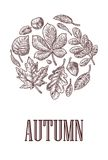 Poster AUTUNB SALE with set leaf and acorn. Vector vintage engraved illustration. Royalty Free Stock Image