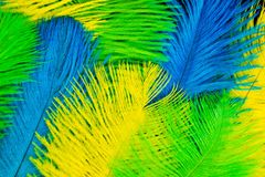 The feathers of birds are green, yellow and blue. Black backgrou. Poster for the carnival. Bright festive feathers in the color of the flag of Brazil Stock Images