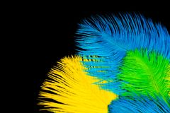The feathers of birds are green, yellow and blue. Black backgrou. Poster for the carnival. Bright festive feathers in the color of the flag of Brazil Stock Photography