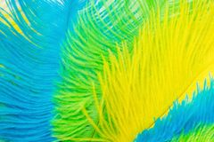 The feathers of birds are green, yellow and blue. White backgrou. Poster for the carnival. Bright festive feathers in the color of the flag of Brazil Royalty Free Stock Photo