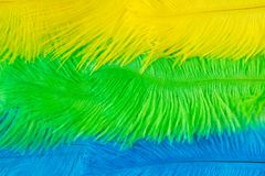 The feathers of birds are green, yellow and blue. White backgrou. Poster for the carnival. Bright festive feathers in the color of the flag of Brazil Stock Photography