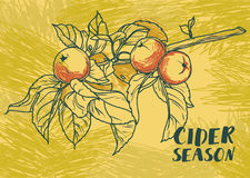 Poster for cider season with beautiful graphic branch of apple tree Royalty Free Stock Photo