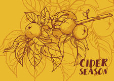 Poster for cider season with beautiful graphic branch of apple tree Royalty Free Stock Image