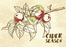 Poster for cider season with beautiful graphic branch of apple tree Stock Photo