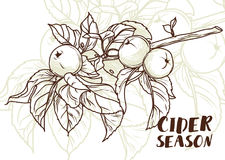 Poster for cider season with beautiful graphic branch of apple tree Stock Image