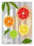 Poster with citrus fruits slices. Mix of lemon lime grapefruit and orange.  vector illustration
