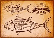 Poster with a detailed diagram of butchering tuna. Retro poster with a detailed diagram of butchering tuna Royalty Free Stock Image