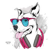 The poster of the dog portrait in hip-hop hat and with headphones. Vector illustration. The poster of the dog portrait in hip-hop hat and with headphones Stock Photo
