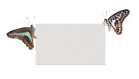 Poster em branco da borboleta Imagem de Stock Royalty Free