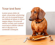 Poster with funny dog sitting at the table with text area. Poster with funny dog sitting at the table ready to eat with text area Stock Photography
