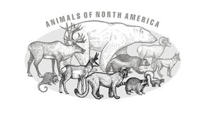 Poster with ianimals of North America. Poster with image of animals North America. Hand drawing polar bear, reindeer, wolverine, steppe ram, coyote, skunk Stock Image