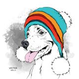 The poster with the image dog portrait in winter hat. Vector illustration. The poster with the image of dog portrait in winter hat. Vector illustration Royalty Free Stock Photos