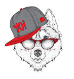 The poster with the image husky portrait in hip-hop hat. Vector illustration. Royalty Free Stock Photos