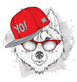The poster with the image husky portrait in hip-hop hat. Vector illustration. Stock Photography