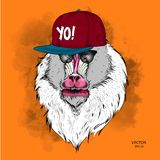 The poster with the image of Mandrill portrait in hip-hop hat. Vector illustration. The poster with the image of Mandrill portrait in hip-hop hat. A Vector Stock Photo
