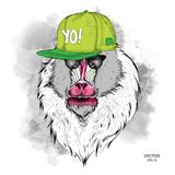 The poster with the image of Mandrill portrait in hip-hop hat. Vector illustration. The poster with the image of Mandrill portrait in hip-hop hat. A Vector Royalty Free Stock Image