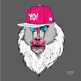 The poster with the image of Mandrill portrait in hip-hop hat. Vector illustration. The poster with the image of Mandrill portrait in hip-hop hat. Ф Vector Stock Image