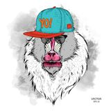 The poster with the image of Mandrill portrait in hip-hop hat. Vector  illustration 63125afc2245