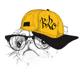 The poster with the image pug portrait in hip-hop hat. Vector illustration. Stock Images