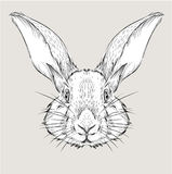 The poster with the image rabbit portrait. Hand draw vector illustration. Stock Photography
