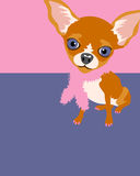Poster layout with Chihuahua. Poster layout with drawing of a funny chihuahua vector illustration