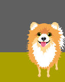 Poster layout with Pomeranian Dog. Poster layout with drawing of funny pomeranian viewed from above Royalty Free Stock Photo