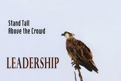 POSTER: Majestic osprey bird stands tall on a tree branch. Inspirational Poster: LEADERSHIP - Majestic osprey bird stands proud on a tree branch royalty free stock image