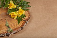 Poster of narcissus with fern on cut down of tree on craft paper Royalty Free Stock Photography