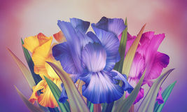 Poster with original artistic colorful fantasy violet iris. Beautiful Greeting Card, Banner, Poster for Woman's Day with original artistic colorful fantasy Stock Images