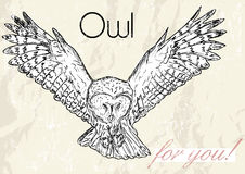 Poster with owl. Vintage style. Royalty Free Stock Photography