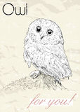 Poster with owl. Vintage style. Royalty Free Stock Image