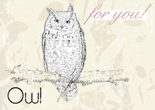 Poster with owl. Vintage style. Stock Photography