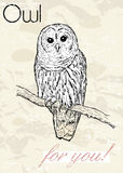 Poster with owl. Vintage style. Royalty Free Stock Photos