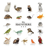 Poster of pets in german royalty free stock images
