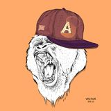 The poster with the portrait of the Ape in hip-hop cap. Leader of a pack of gorillas. Aggressive monkey. Vector illustration. The poster with the portrait of the Royalty Free Stock Photo