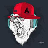 The poster with the portrait of the Ape in hip-hop cap. Leader of a pack of gorillas. Aggressive monkey. Vector illustration. The poster with the portrait of the Stock Image