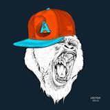 The poster with the portrait of the Ape in hip-hop cap. Leader of a pack of gorillas. Aggressive monkey. Vector illustration. The poster with the portrait of the Stock Images
