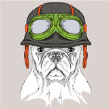 The poster with the portrait of the dog wearing the motorcycle helmet. Vector illustration. Royalty Free Stock Image