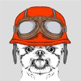 The poster with the portrait of the dog wearing the motorcycle helmet. Yorkshire Terrier.  Vector illustration. Stock Images
