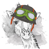 The poster with the portrait of the giraffe wearing the motorcycle helmet. Vector illustration. Royalty Free Stock Photos