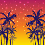 Poster with the shadows of palm trees of yellow-red sunset background. Royalty Free Stock Image