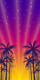 Poster with the shadows of palm trees of yellow-red sunset background. Stock Image