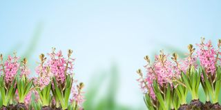 Poster, spring flowers, Stock Image