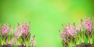 Poster, spring flowers, Royalty Free Stock Photos