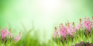 Poster, spring flowers, Royalty Free Stock Photo