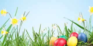 Poster, spring flowers, Royalty Free Stock Images