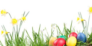 Poster, spring snowflake, narcissus, eggs. In the grass on a white background Royalty Free Stock Photography