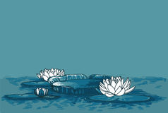 Poster with water lilies in water and place for text. Can be used as summer party invitation, sketch style vector illustration Royalty Free Stock Photos