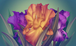 Poster for Woman's Day with original artistic colorful fantasy irises Royalty Free Stock Images